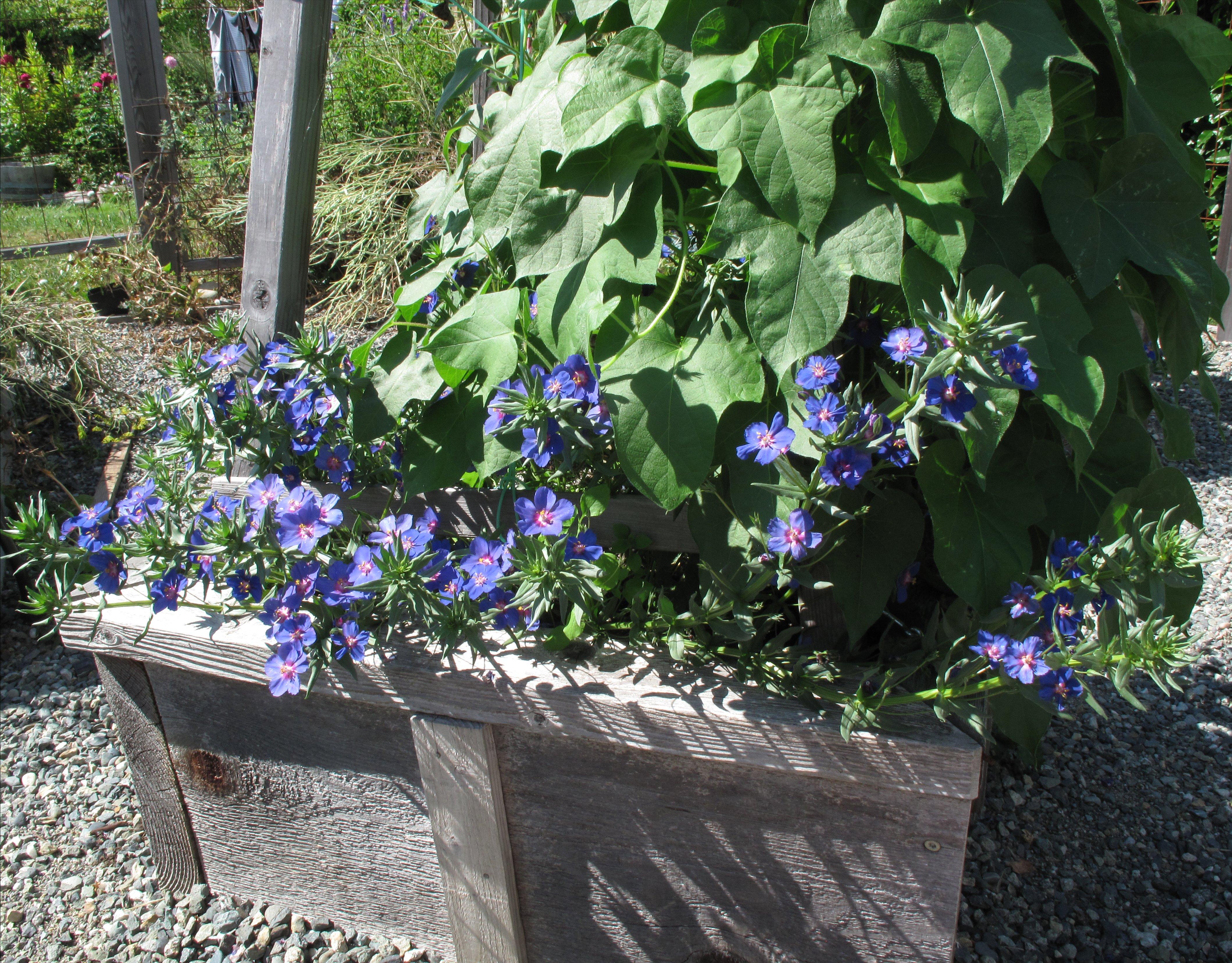 уход и размножение растения