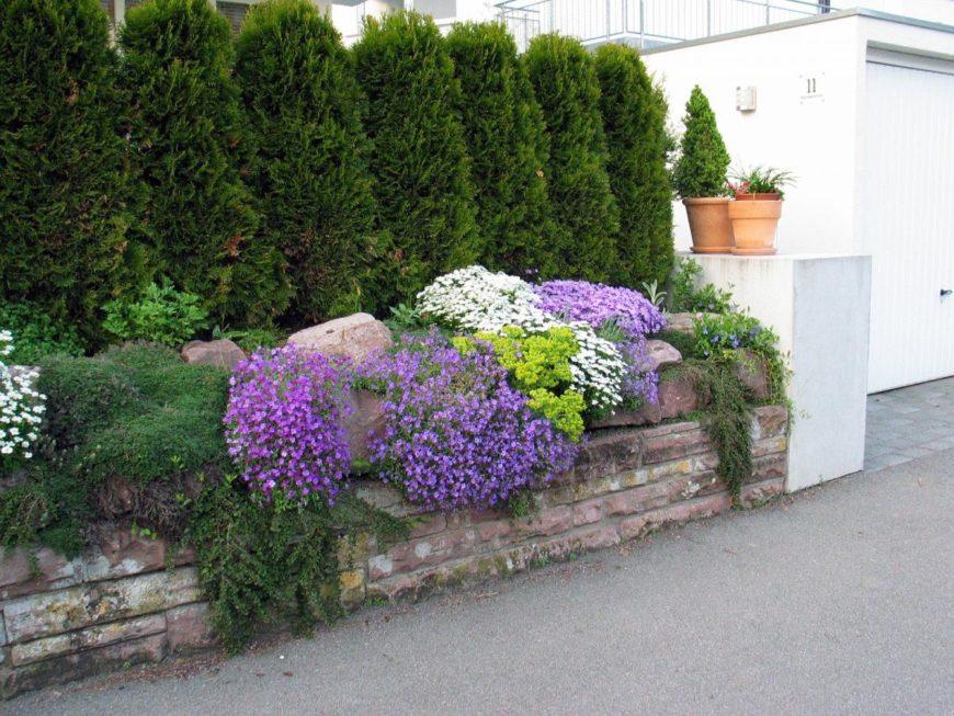 Какие растения посадить вдоль забора