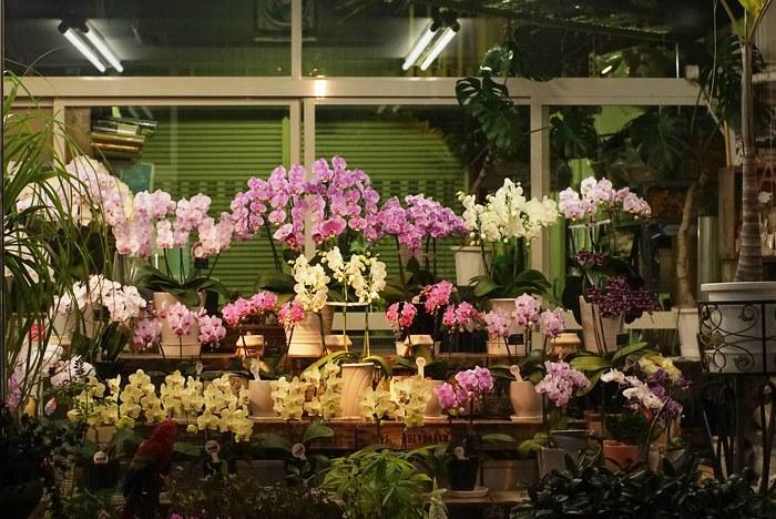 Орхидеи для вашего дома