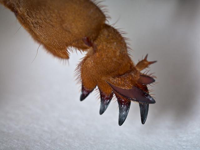 приближенное фото лапы медведки