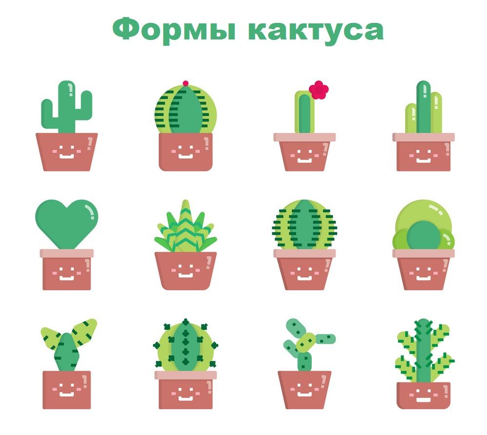 формы кактуса