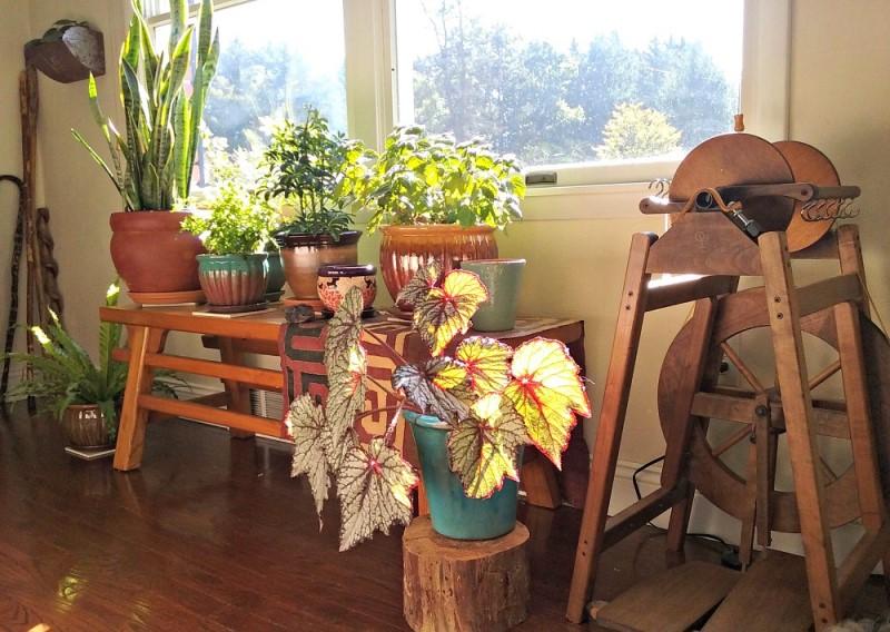 провинциальный интерьер с домашними растениями