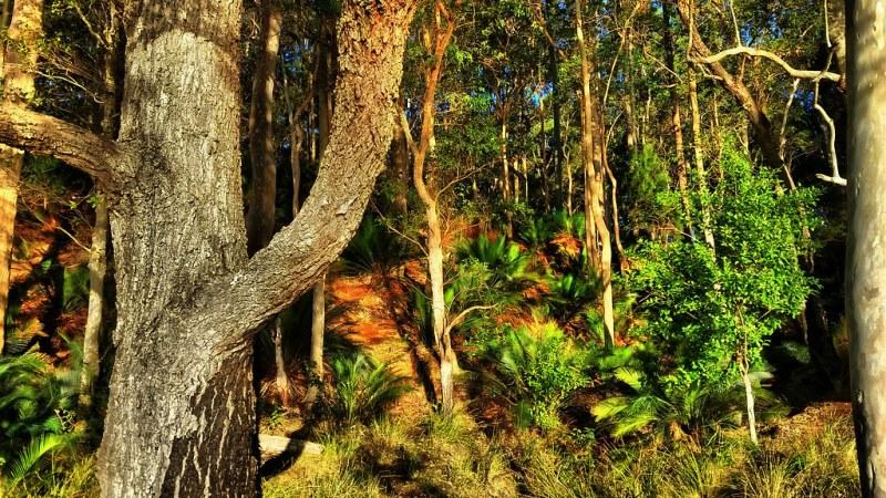 форма растений деревья и кустарники