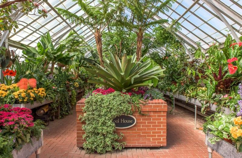 растения из тропиков для дома