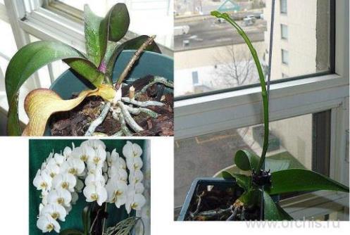 Удобрение Кемира-Люкс для Орхидей