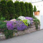 Какие растения посадить вдоль забора?