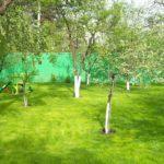 Какие деревья посадить на дачном участке?