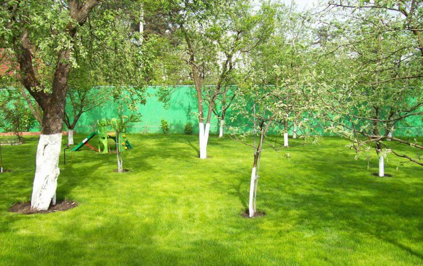 Как выбрать дерево для сада