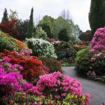 Цветущие кустарники для сада