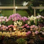 История и описание орхидей