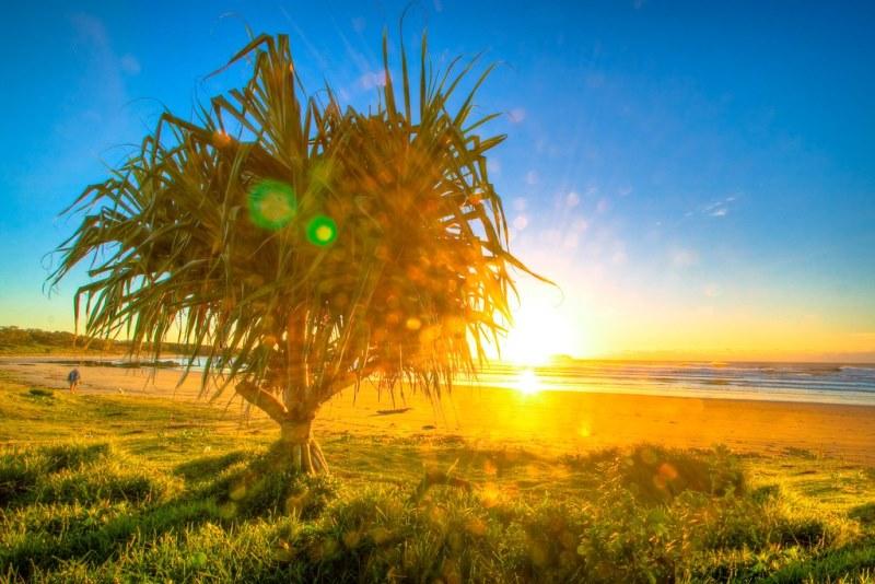 Пальма Пандариус
