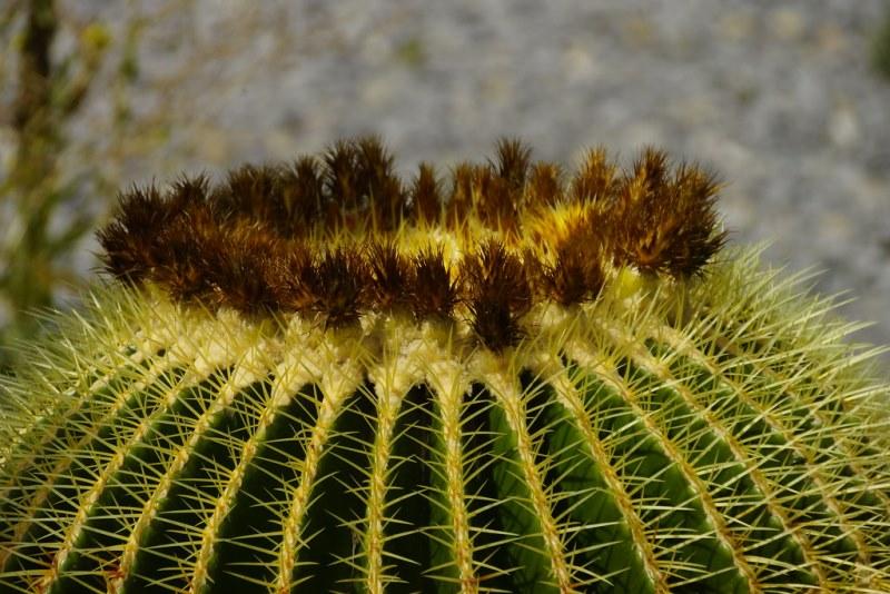 фото кактуса