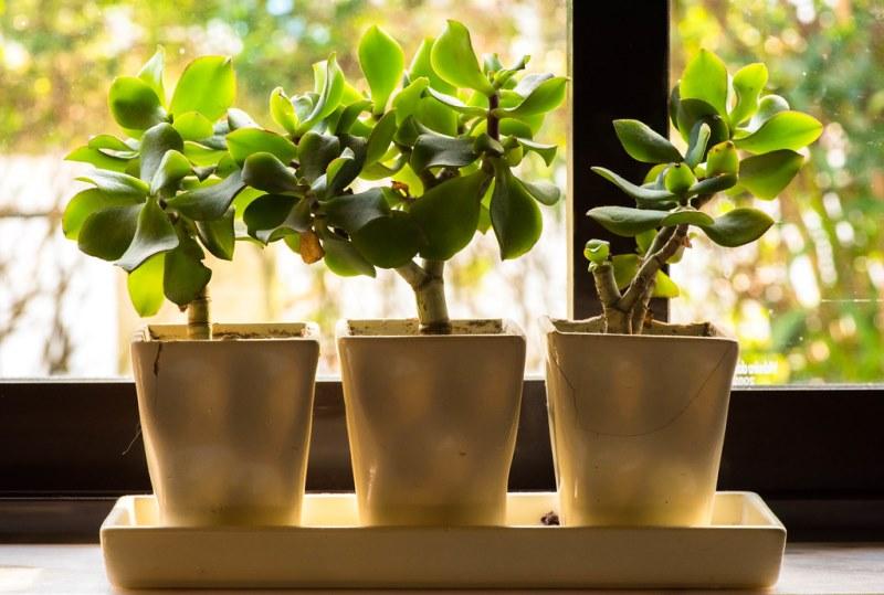 комнатные растения для домашнего уюта