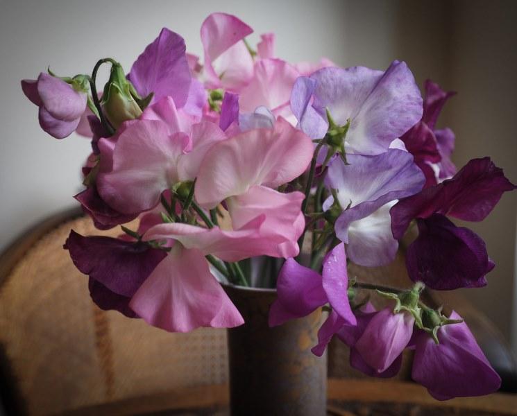 цветущее растение лаутирус душистый
