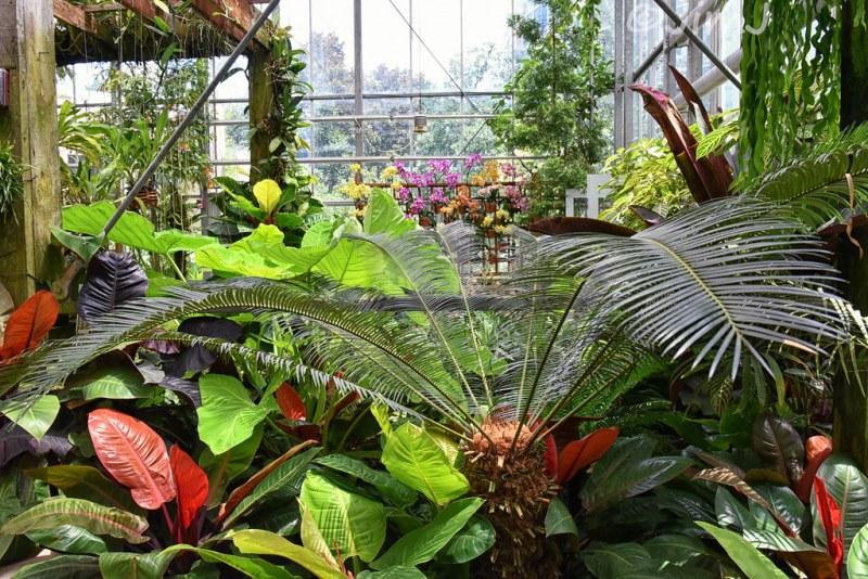 как тропические растения появились в наших домах